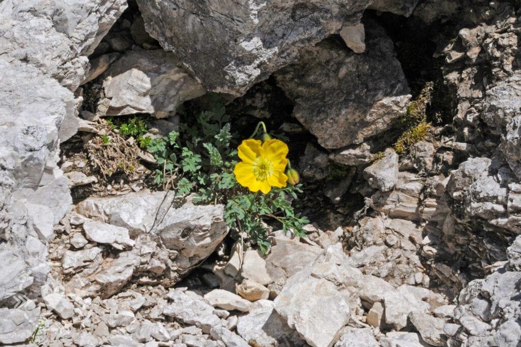 Escursione in Val di Fassa: dal Sass Pordoi a Pian de Schiavaneis