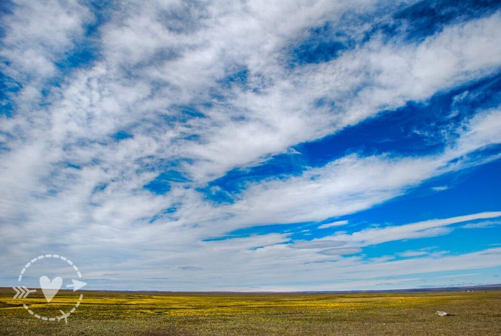 Prati fioriti, Parco Nazionale delle Torri del Paine