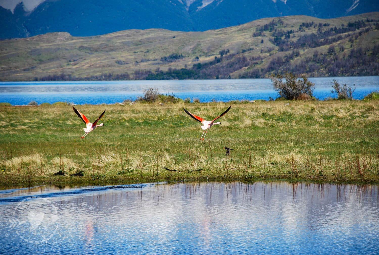 Laguna Azul Parco Nazionale Torri del Paine