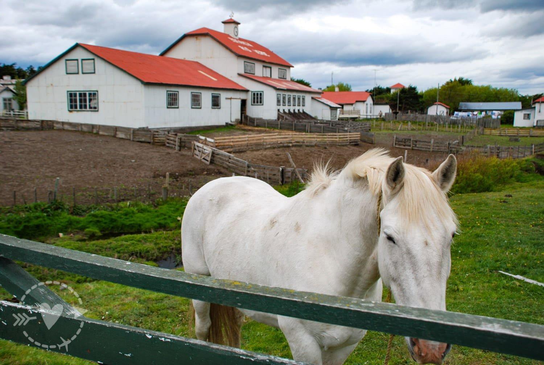 Estancia Rio Verde, Punta Arenas, Cile