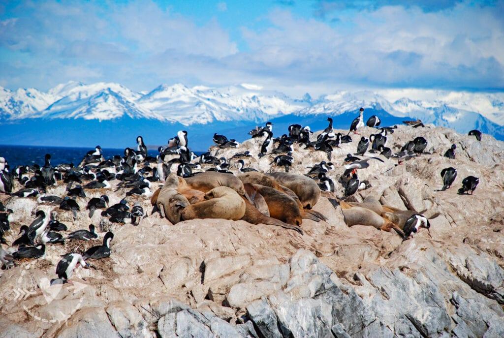 Isola dell'arcipelago delle isole della Terra del Fuoco