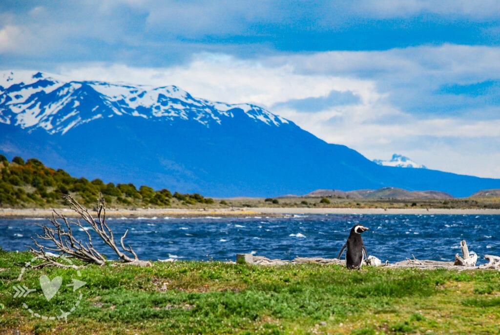 pinguinera Isla Martillo, Ushuaia