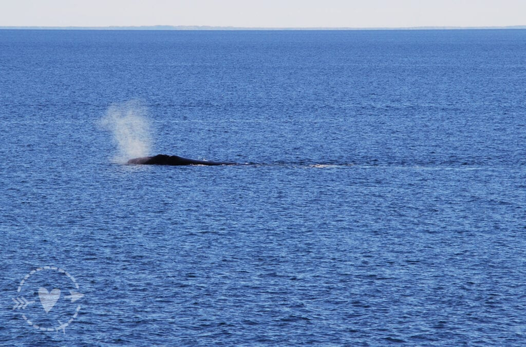 Balena Australis, Penisola Valdes
