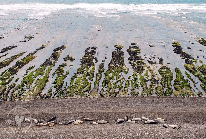 Leoni marini Penisola Valdes