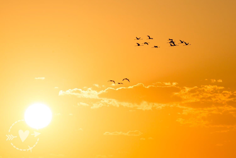 Fenicotteri al tramonto alle saline di Tarquinia