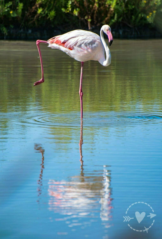 Parc Ornithologique de Pont de Gau, Camargue, Occitania, Francia